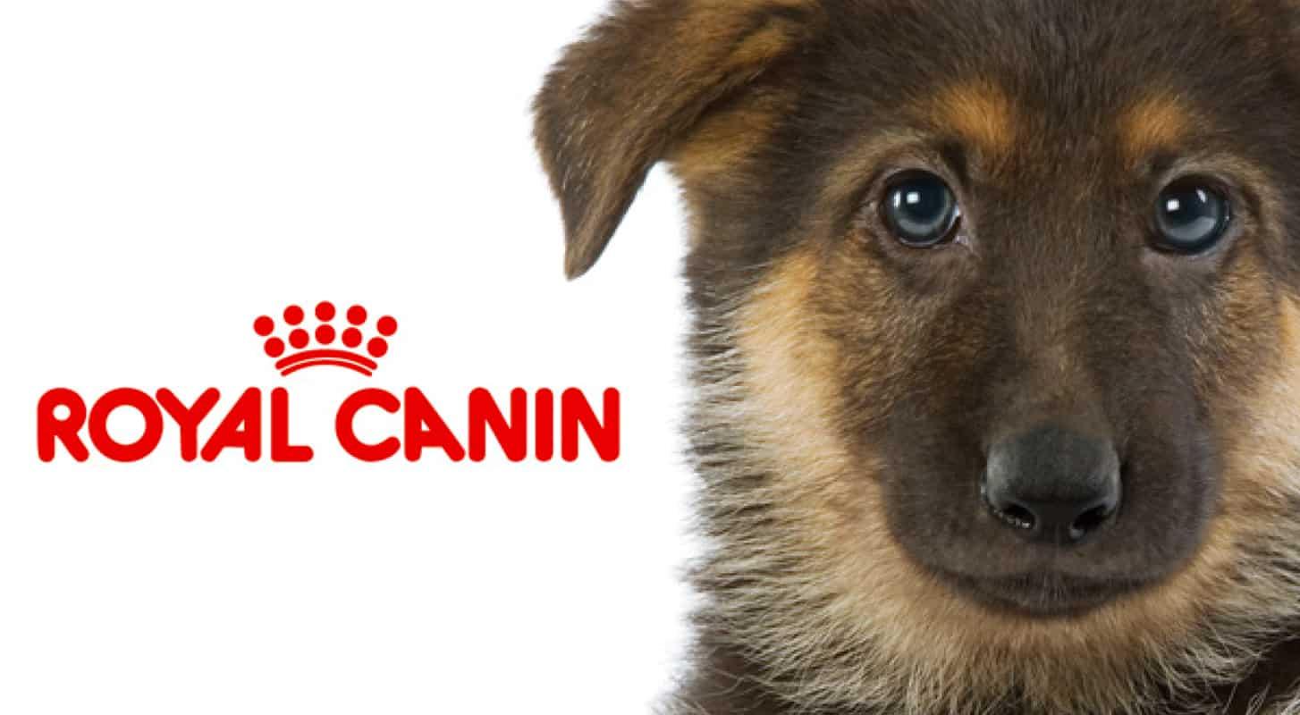 Royal Canin Noon Collectivenoon Collective